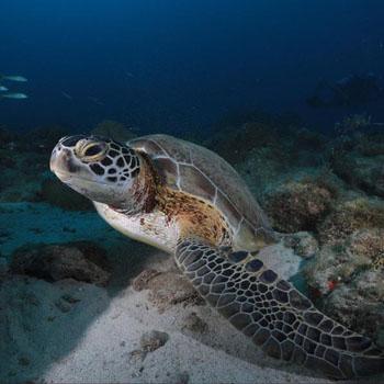 Arashi reef